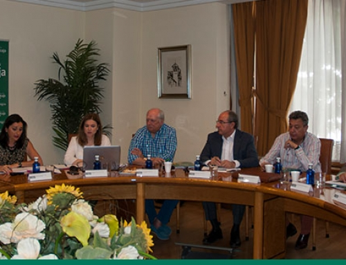 El Patronato avala las cuentas anuales de la Fundación Globalcaja Horizonte XXII